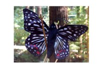 Finger-Puppet-Butterfly-Checkerspot-FG-7242