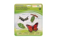 Monarch-Butterfly-Life-Cycle-622616